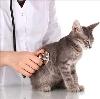 Ветеринарные клиники в Висиме
